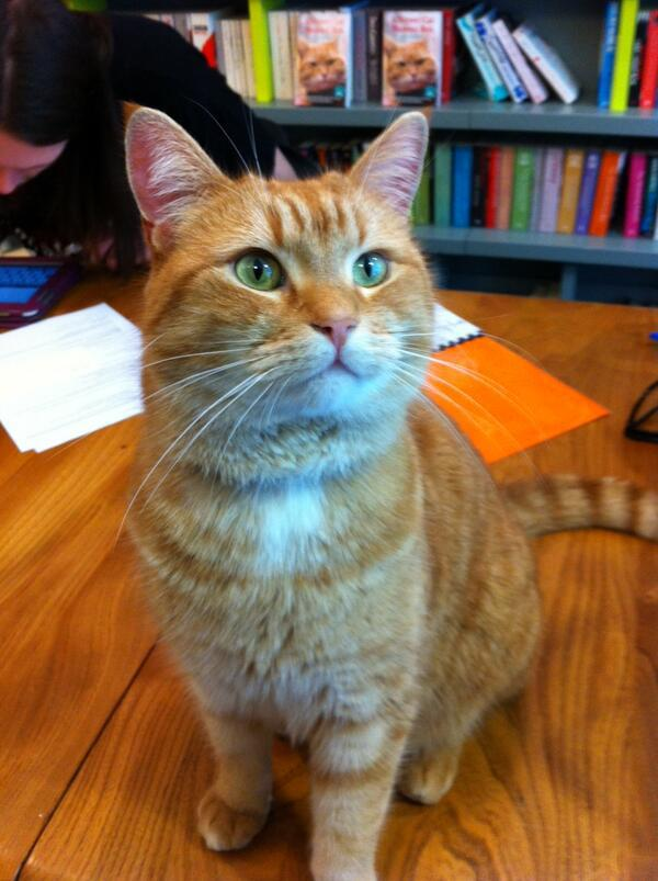 a street cat named bob book pdf