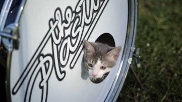 cat_music_video