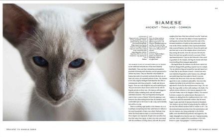 Elegance_of_the_cat