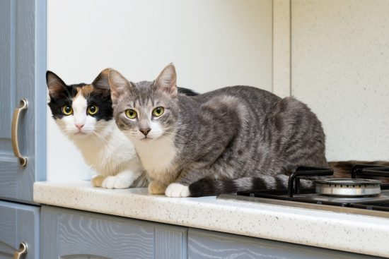 How To Keep Cats Off Of Counters And Tables