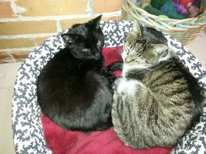 two_cats_in_catbed