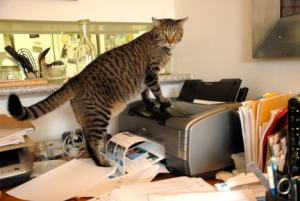 cat_with_printer