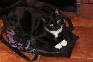 tuxedo_cat