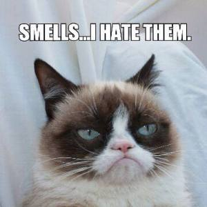 Grumpy_Cat_Odor_Eliminator
