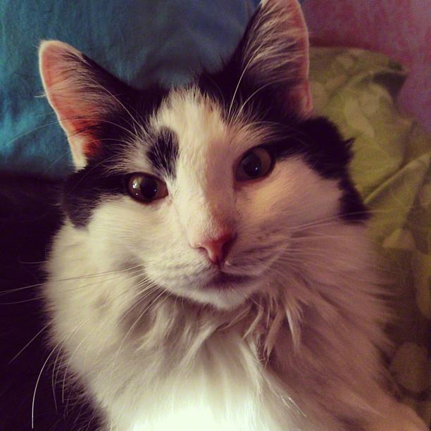 Living With Cat Allergies - The Conscious Cat