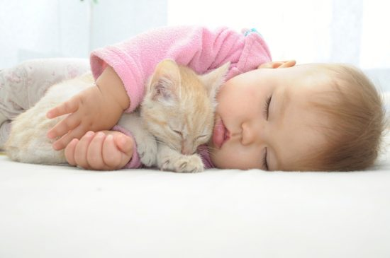 cats-and-babies