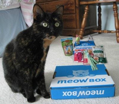 Meow_Box