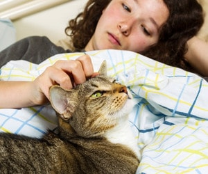 immunocompromised_patients_and_cats