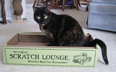 this good size sturdy cardboard scratcher had a unique patented threesided design that lets cats scratch to their heartsu0027 content but it also gives them