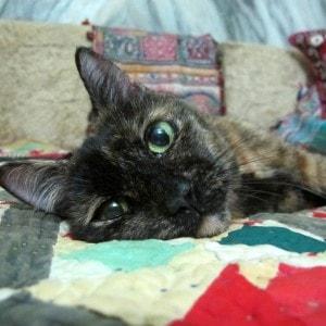 tortie_cat
