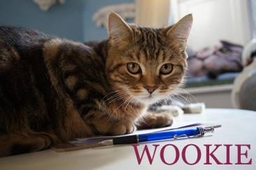 Wookie_cat_cafe