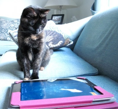 cat_with_iPad