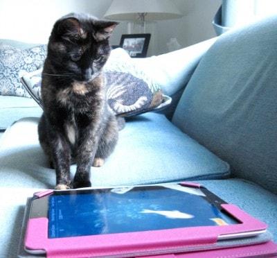 cat_with_iPad
