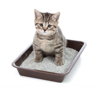 feline_house-soiling