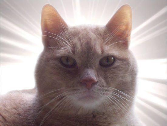cat_euthanasia