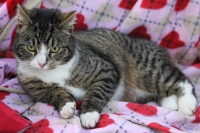 cat_on_blanket