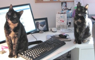 cats_on_desk