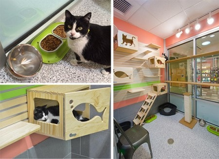 Boulder_Valley_Humane_Society