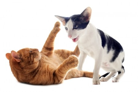 aggression_between_cats
