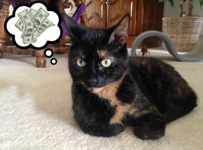 cat_with_money