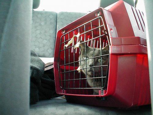 cat_in_carrier