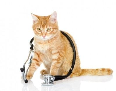 cat_vet_stethoscope