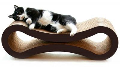 cat_lounge