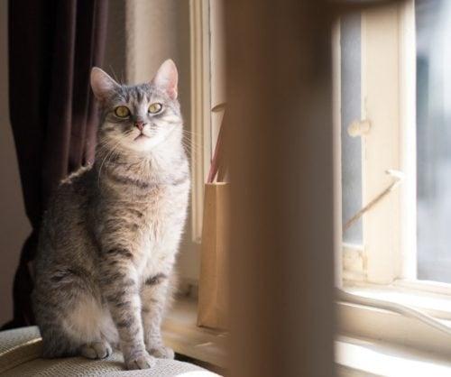 indoor_cat_happy