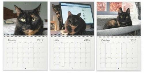 tortoiseshell_cat_calendar