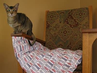 cat_bed
