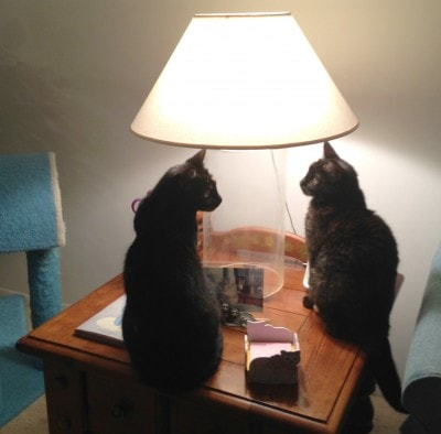cats_with_lamp