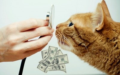 cost_of_veterinary_care