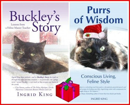 my books holiday promo