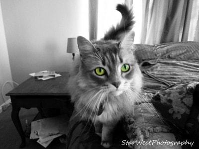 cat-photography