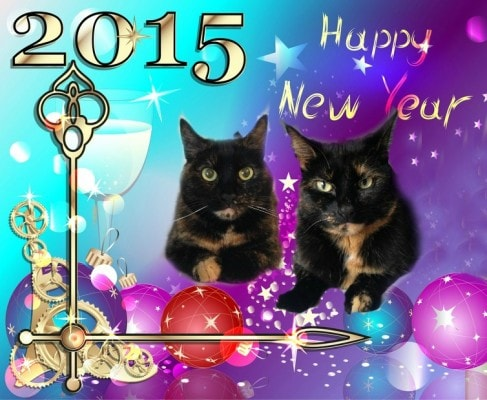 happy-new-year-cats