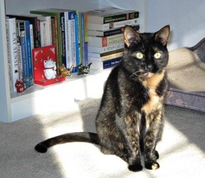 top-10-cat-books