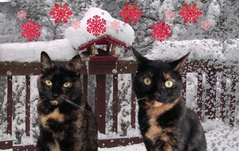 cats-in-snow