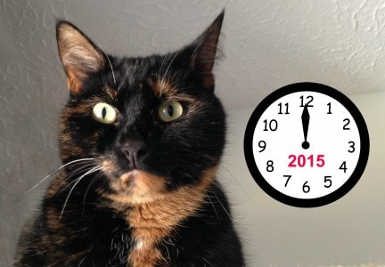 cat-with-clock