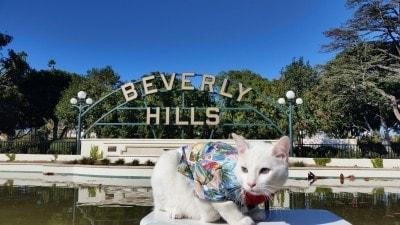 Beverly-Hills-cat