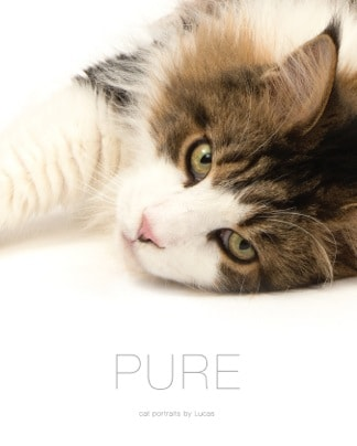 pure-cat-portraits