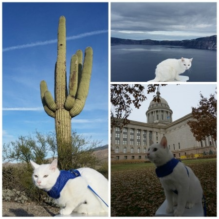 StovePipe-Traveling-Cat