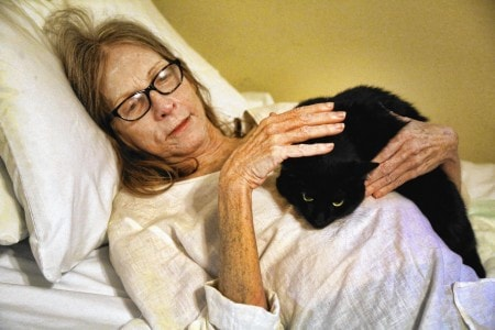 cat-reunited-hospice-patient