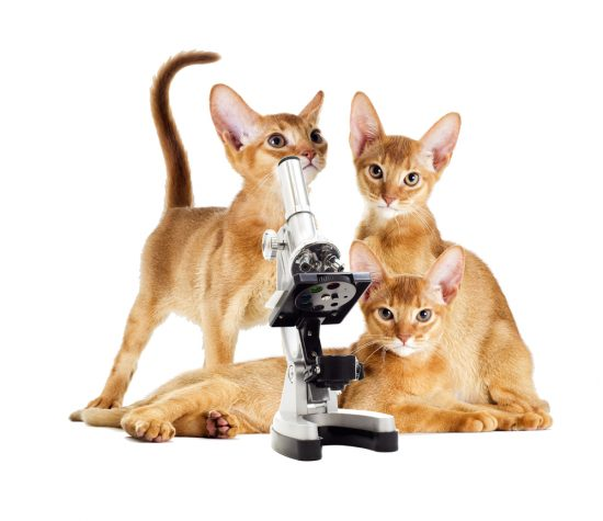 cats-with-microscope