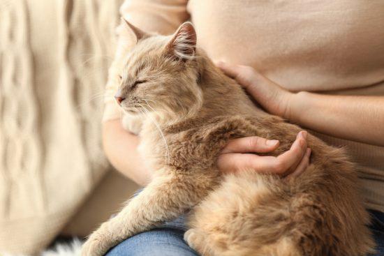 cat-on-lap