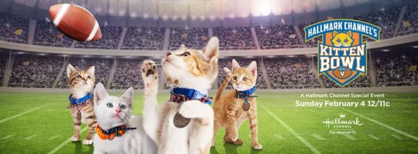 hallmark-channel-kitten-bowl