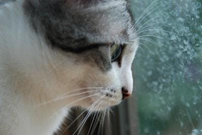 cat-window-frost