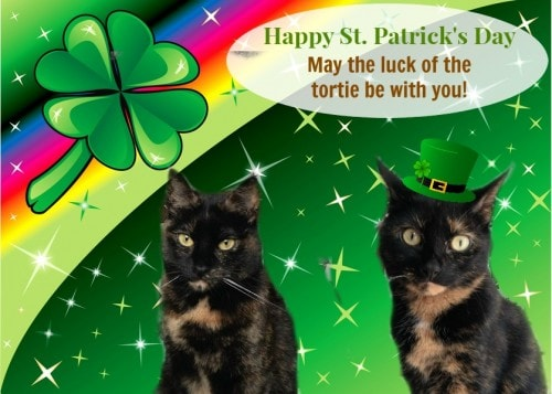 St.-Patricks-Day-cats