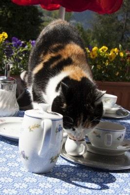 cat-tea