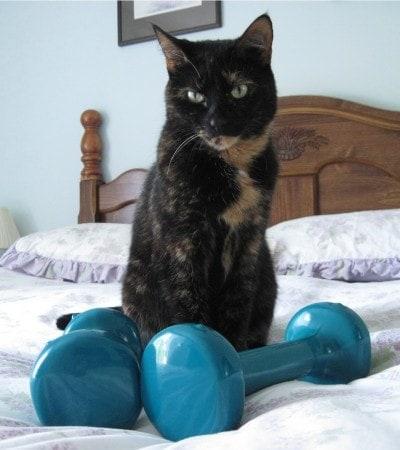 cat-exercise