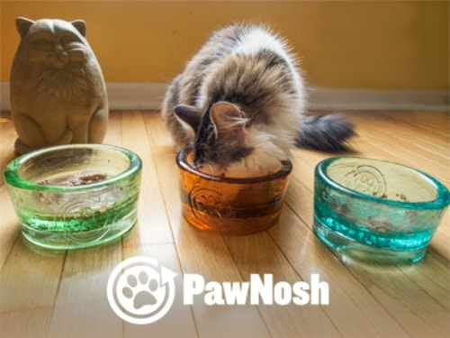 glass-cat-bowls